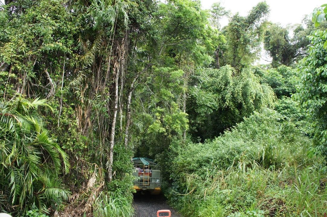 ジャングルクルーズ熱帯雨林の中へ